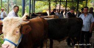 İşte Bartın#039;daki Sığır Sayısı