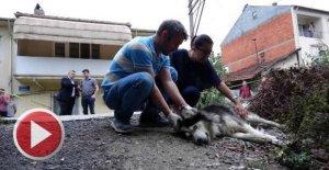 Sokakta çişini yapan köpek ve sahibini tüfekle yaraladı