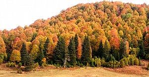 Küre Dağları Milli Parkı'nda Renk Cümbüşü