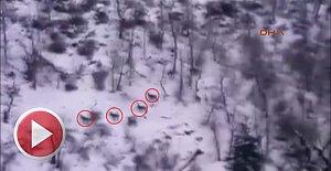 Kızıl Geyikler Karla Kaplı Ormanda Görüntülendi
