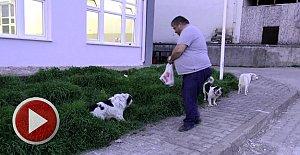 Tekme Attığı Köpeği Elleriyle Besledi