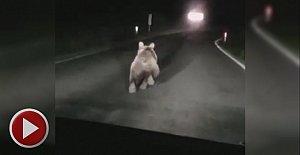 Otomobilin önüne ayı çıktı