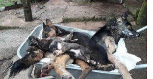 Öldürülen Köpeklerle İlgili Flaş Gelişme