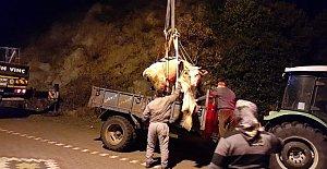 Yamaçtan yuvarlanan inek vinçle kurtarıldı