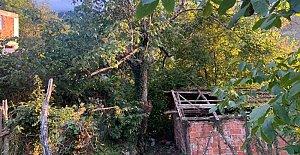 Ceviz toplamak için çıktığı ağaçtan...