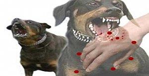 İnkumu#039;nda Köpek Dehşeti