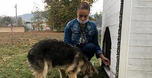 Köpeği döven kişiden şikayetçi...