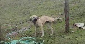 Otomobilini Durdurup Köpeği Kurtardı