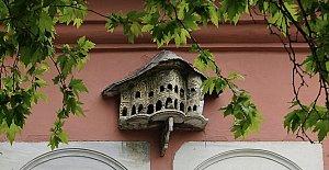 Bartınlı Sanatçı Taşhan Kuş Evleri İle Finalde