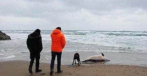 Bartın'da üzücü görüntü, sahile vurdu
