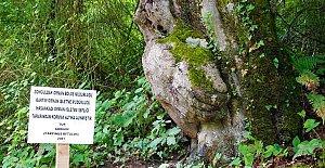 Bu Ağaca Bakan Bir Daha Bakıyor