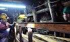 Madenin Başkentine Güney Afrika'dan İthal Kömür