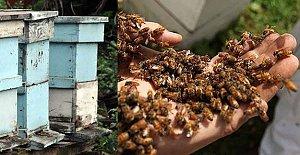 Arılar Hastanelik Etti