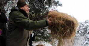 Bakan Eroğlu yaban hayvanlarına yem bıraktı, göle balık saldı