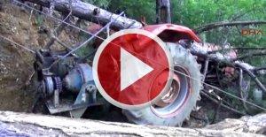 Devrilen ağacın altında kalan işçi öldü