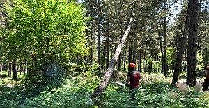 Şehir Ormanı'nda ağaç kesimine tepki