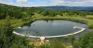 Göle 30 Bin Sazan Yavrusu Bırakıldı