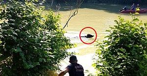 Bartın Irmağı'nda Manda Alarmı
