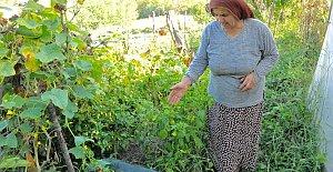 Bartın'da Dev Salatalık; 1 Metre ve 30 Kilo