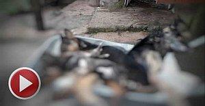 Arıt'ta Katliam, 6 köpek canice öldürüldü