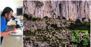 Yeni Endemik Tür: Astragalus Bartinense