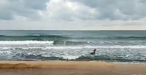 Kayalıklardan Denize Düşen Karaca Kurtarıldı