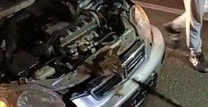 Otomobilin Motoruna Tilki Girdi