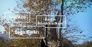 426 Yaşındaki Ağaç Koruma Altında