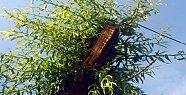 Ağlayan Ağacın Şifresi Çözüldü - İzle