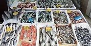 Batı Karadeniz'de Balık Fiyatları El