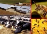 Besi Sığırı ve Arıcılık Destekleme Listeleri yayınladı