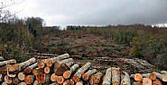 43 Bin Ağaç Kesilecek