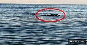 34 Gün Sonra Denizden Çıkarıldı