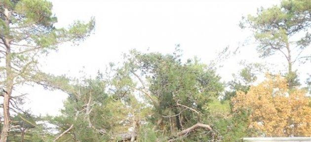 Yoldan Çıkan Kamyon Ağaçlara Çarparak Durabildi: 1 Yaralı