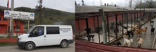 Bartin Belediyesi Nden Kedi Evi Projesi
