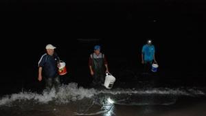 Bartın'da Tonlarca Balık Sahile Vurdu