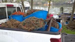 Bartın'da kaçak avlanan kalkan balıkları, denize bırakıldı