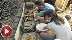 2 Civcivle başladı, 250 Tavukla siparişlere yetişemiyor