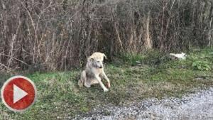 Bartın'da Jandarma yaralanan köpeğin tedavisini sağladı
