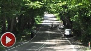 Ağaçların oluşturduğu tünel ilgi odağı