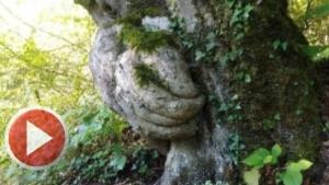 Ağaçtaki El Görenleri Şaşırtıyor