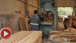Kumluca'da Sap Üretip Ortadoğu'ya İhraç Ediyorlar
