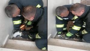 Bartın'da başı boruya sıkışan kedi kurtarıldı