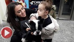 Köpeği İçin Doğum Günü Partisi Düzenledi