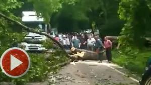 Ağaç devrildi, Bartın Karabük yolu kapandı