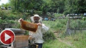 Aşırı Yağışlar Bal Üretimini Etkiledi