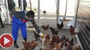 Özel Öğrenciler Yumurtaları Toplayıp Yiyorlar