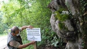 Bartın'daki İlginç Ağaca Bakan Bir Daha Bakıyor