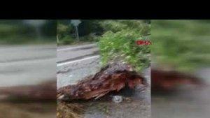 Bartın'da Şiddetli Rüzgar: 1 yaralı