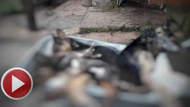 Bartın'da 6 köpeği katlettiler